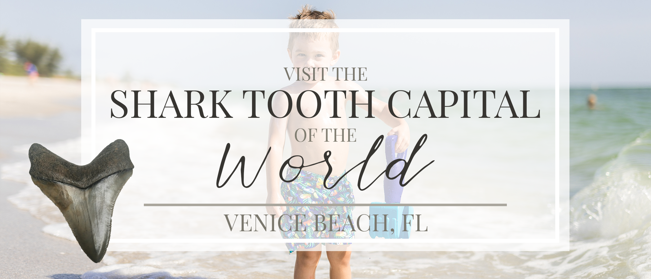 Get the Most Out of Your Visit to the SHARK TOOTH CAPITAL of the World! | VENICE BEACH, FL