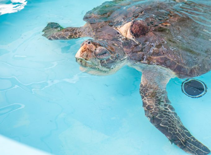BEHIND THE SCENES: Loggerhead Marine Life Center!!